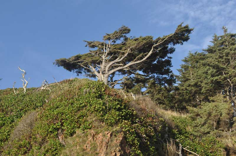 tree-orig