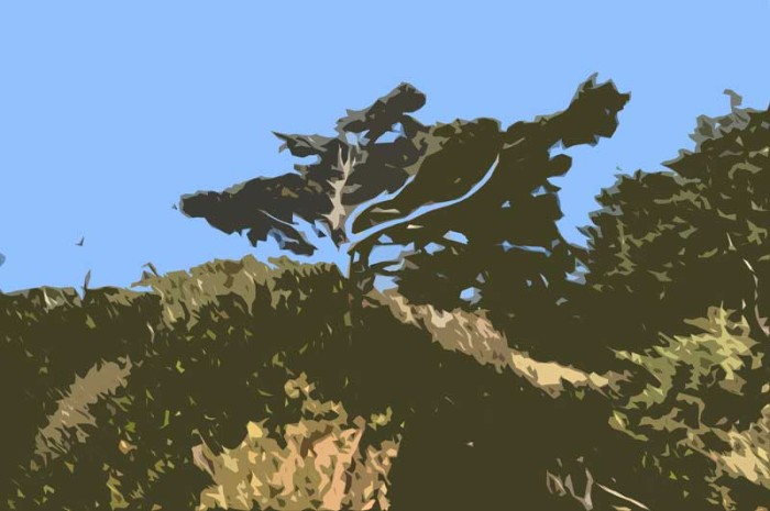 tree-smudge-cutout